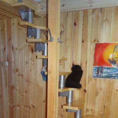 Фото сходів DOLLE Athena з котом